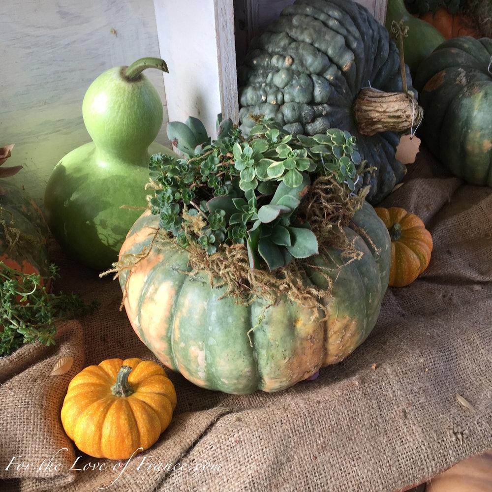 Green and ochre pumpkin planter, green gourds and tiny orange pumpkin