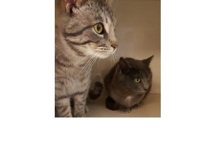 catsnip3.jpg