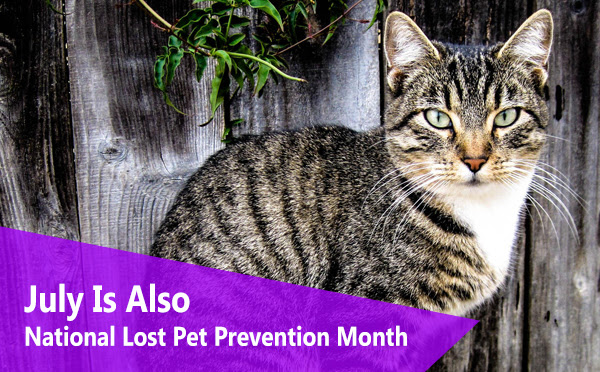 LOST PET PREVENTION