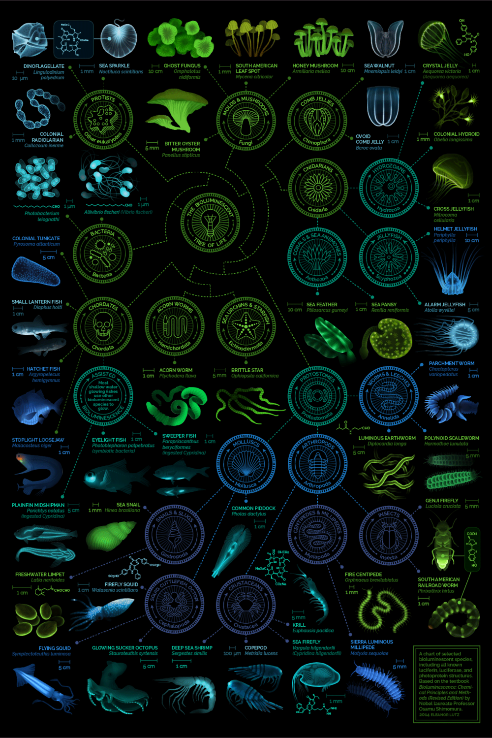 A beautiful chart of biolumescent creatures