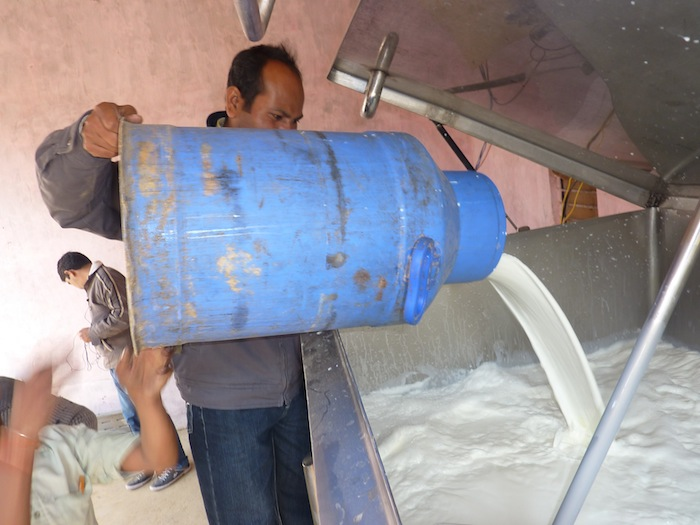 Samridhi Center Manager Sunil adds milk to the Bulk Milk Chiller (BMC). January 2012.
