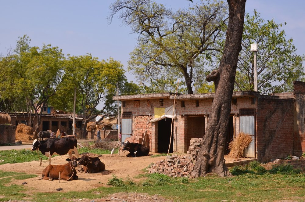A small farm near Lucknow, Uttar Pradesh