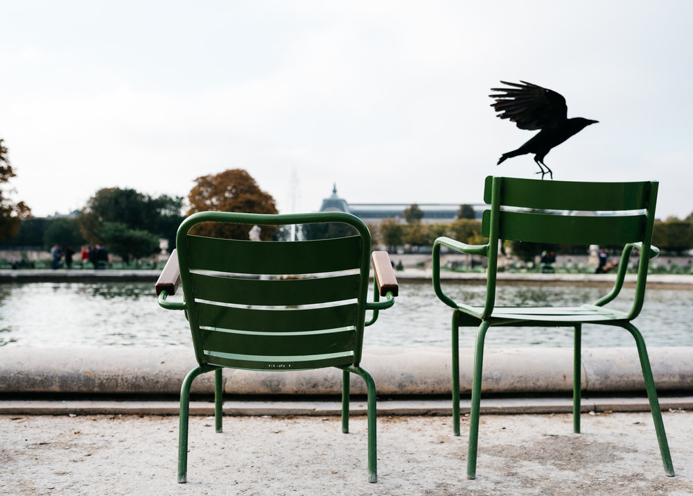 Chairs in Jardin des Tuileries