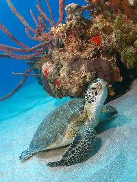 SeaTurtleDiveHotelPackage