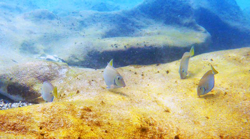 Scuba Dive Wonders