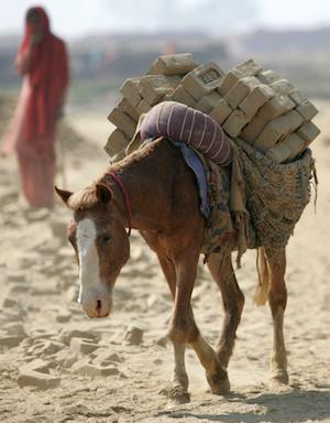 Brick Kiln Horse