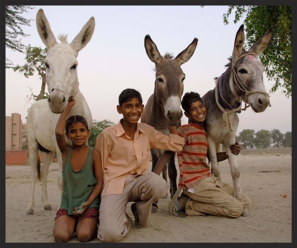 Winners of the Brooke's Happy Donkey contest in India www.BrookeUSA.org.jpg