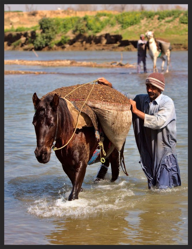 Hauling sand from the river in Pakistan www.BrookeUSA.org.jpg