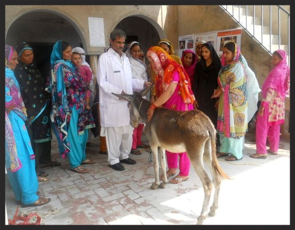 A Brooke veterinary assistant teaches a hands-on demonstration of equine welfare to a group of Lady Livestock Workers in Pakistan.