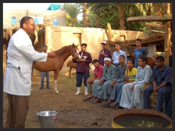 A Brooke veterinarian in Egypt conducts a community awareness session on equine welfare.