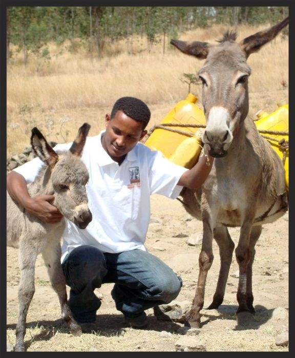 A Brooke veterinarian in Ethiopia makes friends with a mare and foal before examining them.