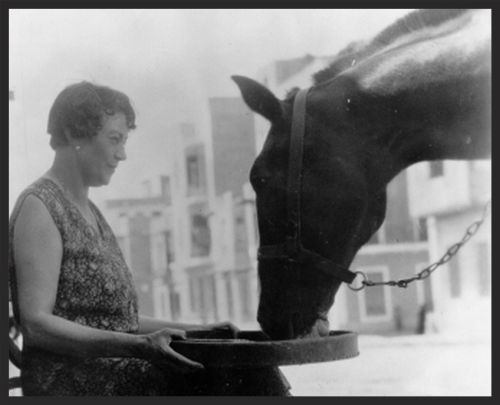 Dorothy Brooke feeds a rescued war horse in Cairo, 1930s.  Dorothy was involved in the day-to-day operations of the Brooke Hospital for Animals which she founded for many years