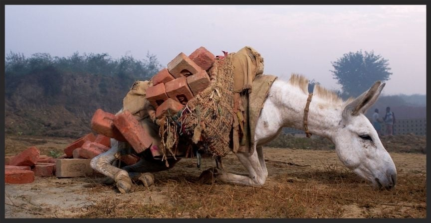 Collapsed donkey with bricks low res  www.BrookeUSA.org.jpg
