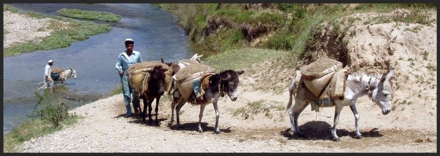 Sand extraction by donkeys from a river in Pakistan