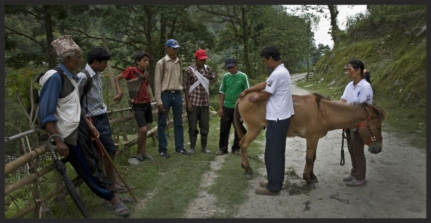 Brooke Nepal staff demonstrating sound equine welfare practices to a group of owners