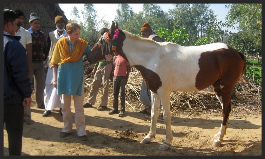 Karen Reed, Head of Animal Welfare and Research for the Brooke, meets a horse in one of the Brooke-engaged communities in India