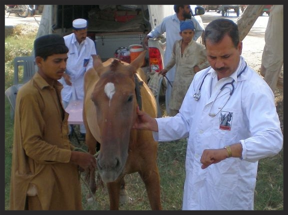 A Brooke mobile veterinarian treats a horse who collapsed from heat stress and dehydration while working on a street. Thanks to donors, our mobile veterinary unit was there to bring down the horse's fever, give him fluids, and instruct the owner in ways to prevent this from recurring.