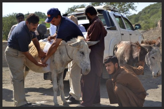 Brooke veterinarians at the entrance of a coal mine in Pakistan, treating the wounded animals after they unload their heavy burdens of coal.