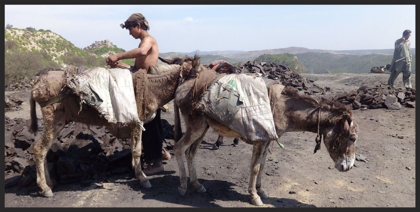 After they have carried their loads of rock and coal out of the mines and into the light, the donkeys are unloaded, then head back into the mines for more loads during 10-hour work days. But the lives of the animals who work in the shafts of coal mines in Pakistan will begin to see an improvement now that Brooke veterinarians will be visiting them regularly.