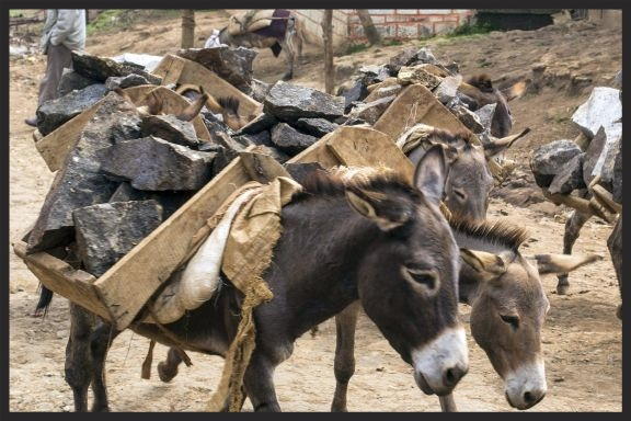 Donkeys carrying stones from a quarry in Ethiopia