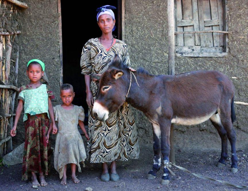 Ethiopian family and donkey www.BrookeUSA.org.jpg