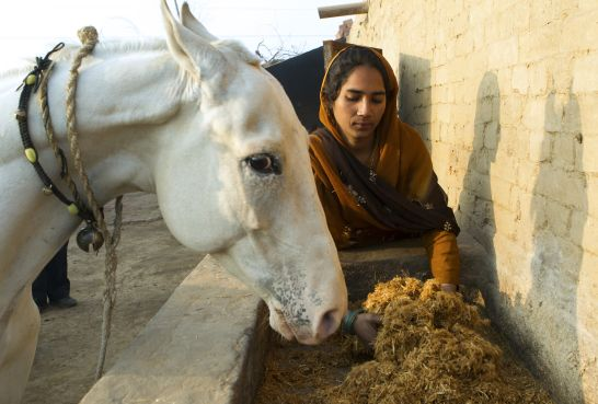 This owner and her horse work in a brick kiln in India. She has learned how to improve her horse's welfare through proper nutrition.