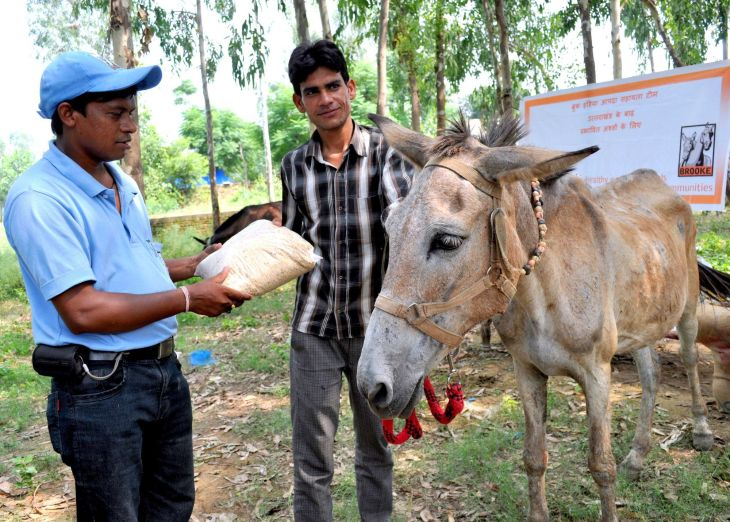 Brooke supplied emergency feed for thousands of animal victims of floods in India.