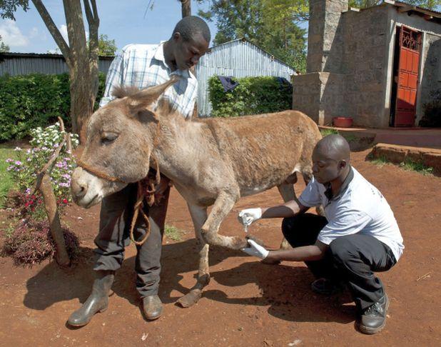 RS5432_Case Study 9_BrookeKenya2012_008hr-lpr www.BrookeUSA.org.jpg