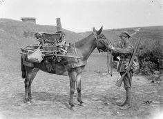 ww1 mule and soldier.jpg
