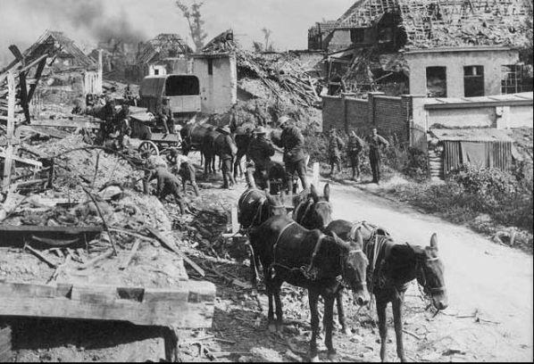 ww1 horses mules.jpg