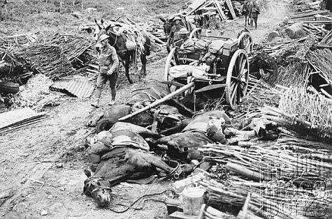 ww1 horses dead supply.jpg