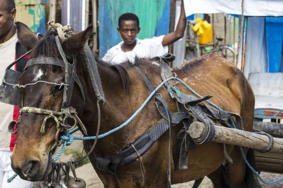 Badly harnessed horse in Ethiopia www.BrookeUSA.org SMALL.jpg