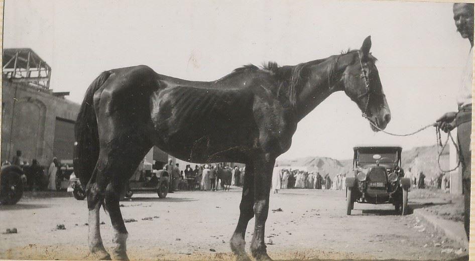 Dorothy Brooke Cairo horse.jpg