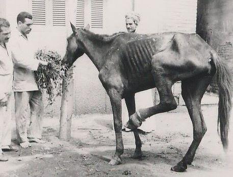 Dorothy Brooke Cairo horse 2.jpg