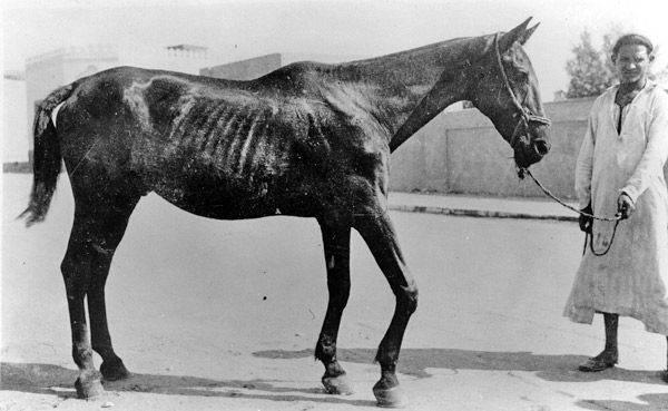 Dorothy Brooke horse.jpg