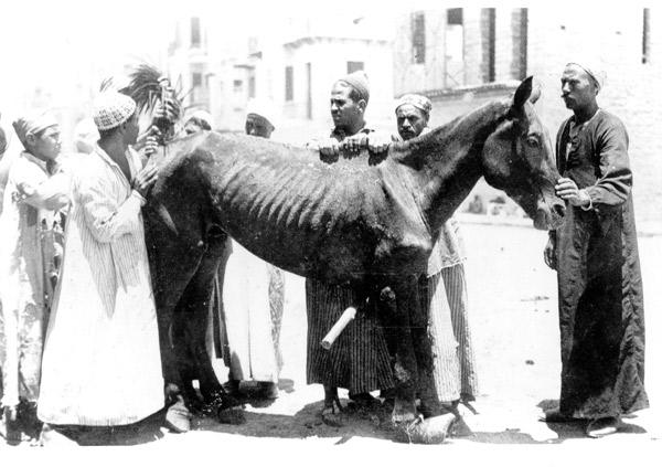 Dorothy Brooke horse 2.jpg