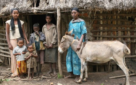 A working equine in the developing world provides a livelihood for an average of six family members.