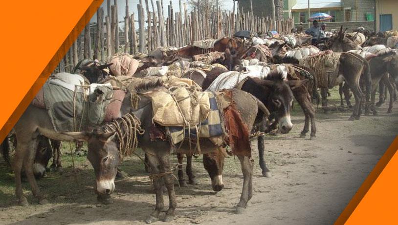 Ethiopia market with corners 2.jpg