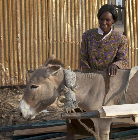 """The donkey (Aisha) is like an ATM to me."" i.e. whenever she wants money, the donkey will provide from the services it renders- Ruth Wanjeva, Ruai, Nairobi, Kenya"