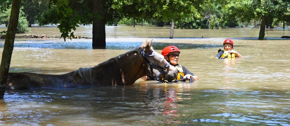 Photo from Houston SPCA