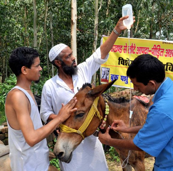 Photo of an equine victim of a devastating earthquake and flash floods in India, where Brooke veterinary teams assisted thousands of animals.