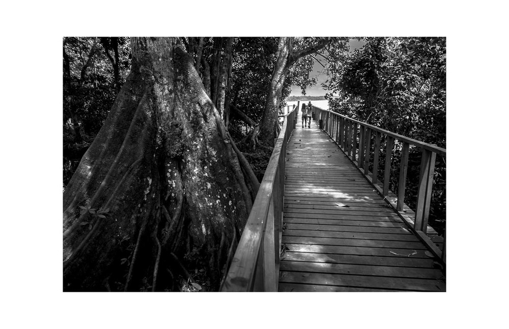 4. Mangrove_DONT USE THIS_Use Your File from yesterday_Mangrove_Long Walk_Guate-9132_Final_web.jpg