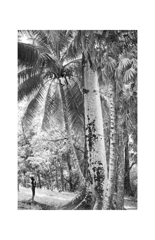 1. Edit_Tree Climbing-9322.jpg