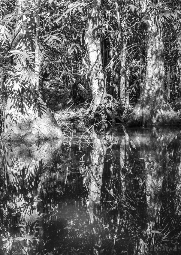 15. Jungle Tree-9377_web_NO FRAME.jpg