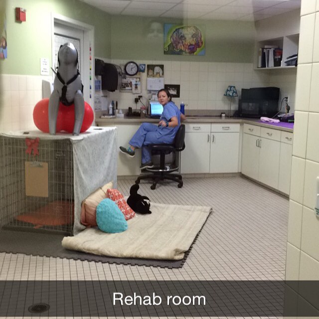 In Florida 🌴😎 studying the first 2 parts of my rehab certification at the Canine Rehab Institute. Bring your sport dogs for an assessment !