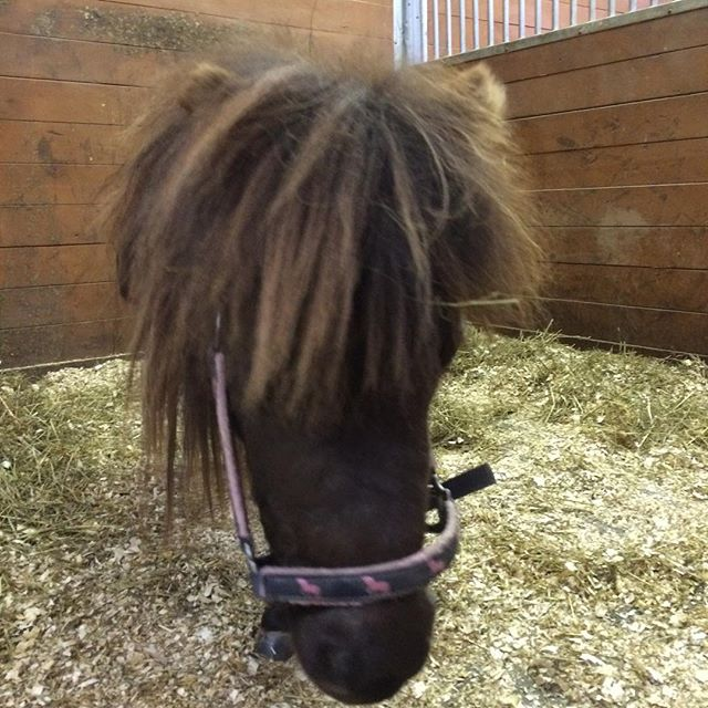 Cute little Hope  was so good for her dental float today!! Teeth all fixed up.🐴#cuteminiaturehorse