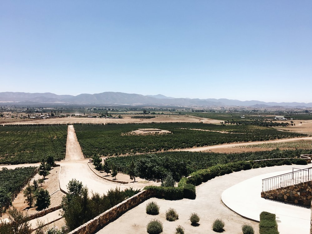 view from winery in Valle