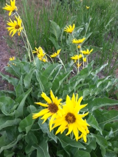 Balsamroot Massage