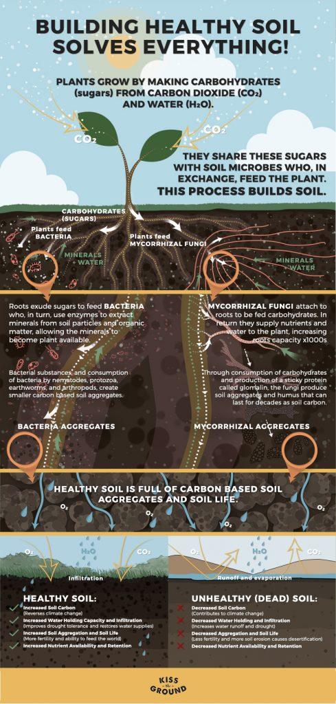 healthysoil_info_FV2-489x1024.jpg
