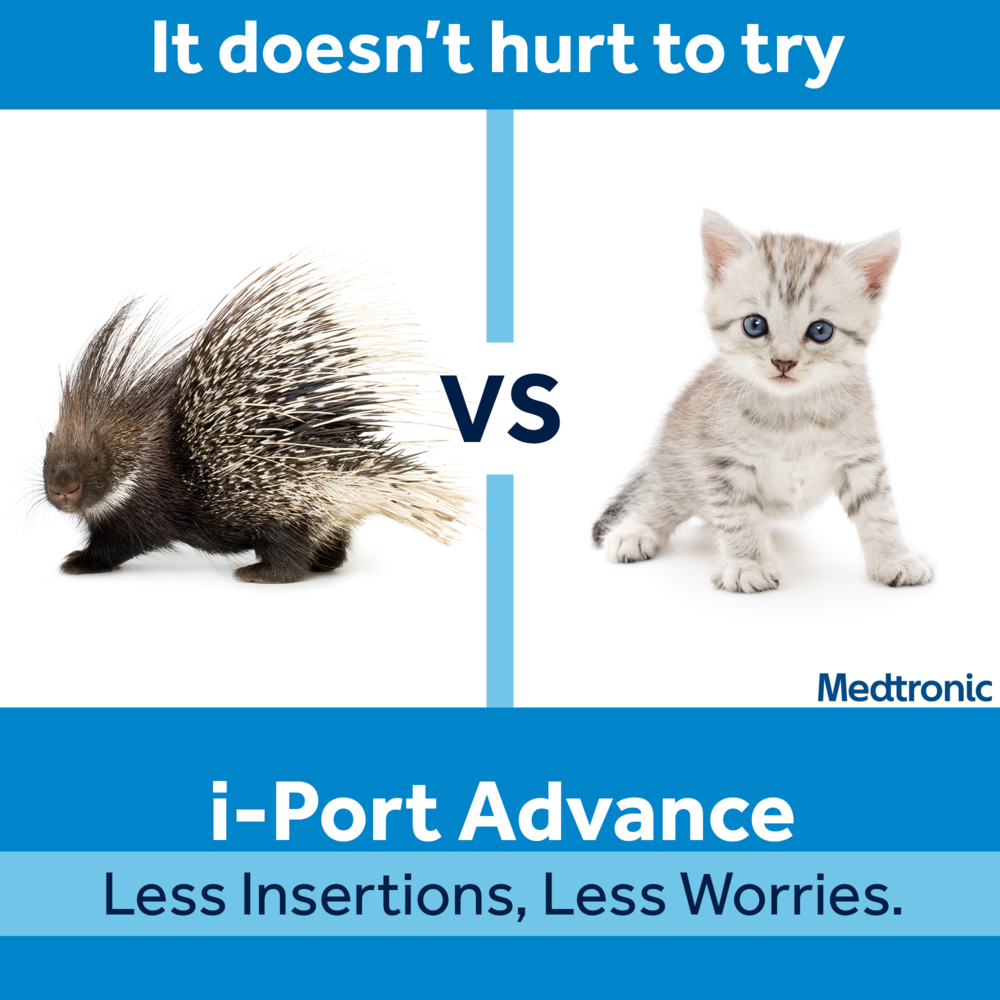 porcupine_vs_kitten_FINAL.png